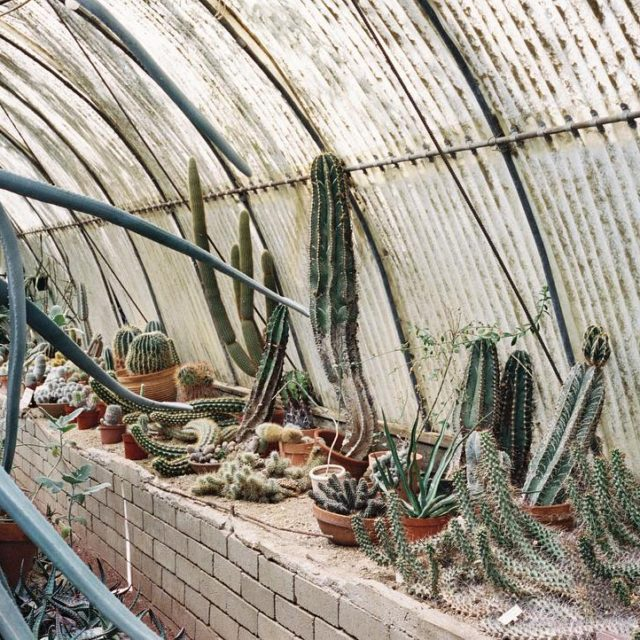 My favorite cacti greenhouse of all time! Having an intimatehellip